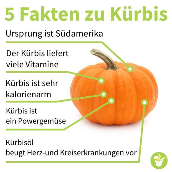 "Kürbis Karotten Kokos Suppe - unsere ""3K"" Lieblingssuppe - Fakten zu Kürbis v3 - 2"