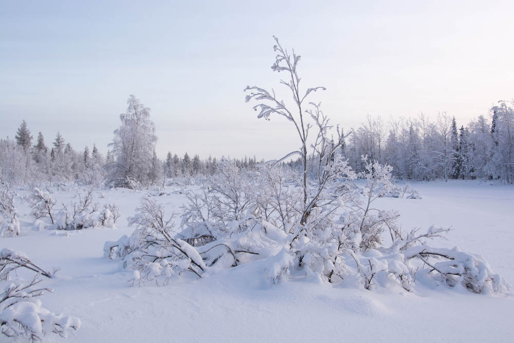 Extreme BBQ in der Wildnis von Lappland - Lappland 088w - 86