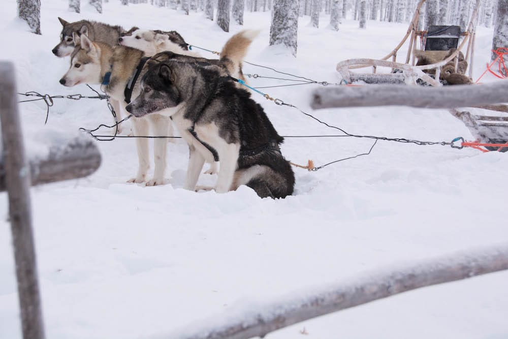 Extreme BBQ in der Wildnis Lapplands - Lappland 123 - 60