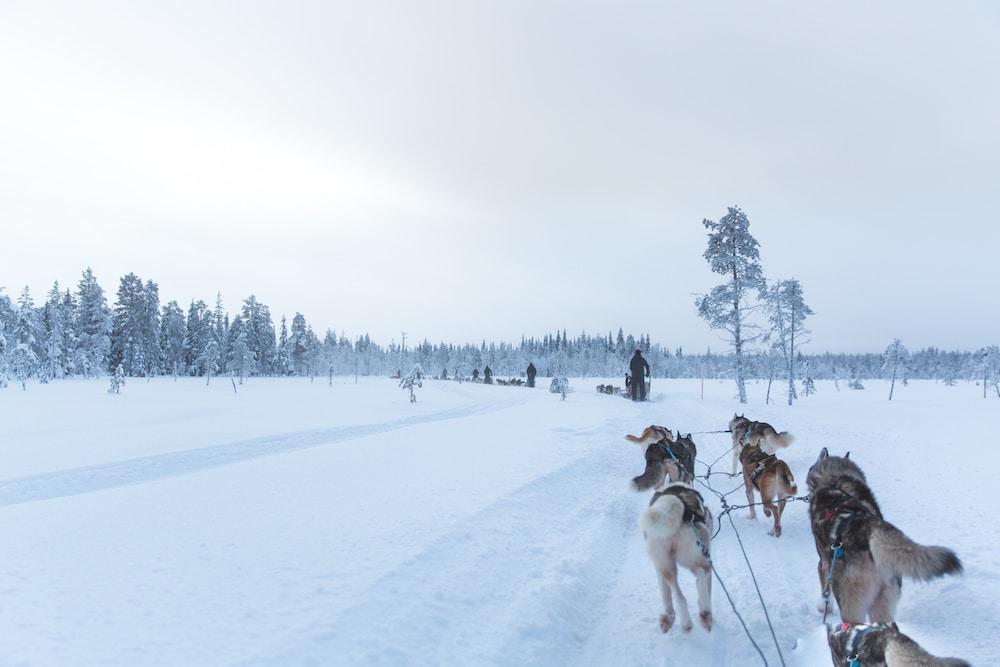 Extreme BBQ in der Wildnis von Lappland - Weber H2A4325 Husky - 18