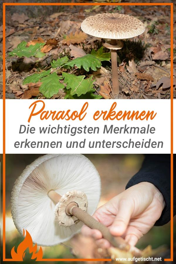 Parasol finden, erkennen und genießen - lecker durch die Pilzsaison - parasol erkennen - 13