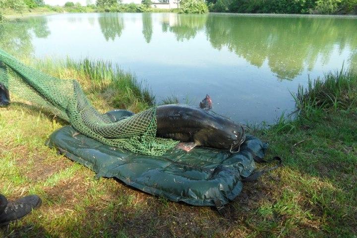 Angeln im Fischerparadies Pocenia