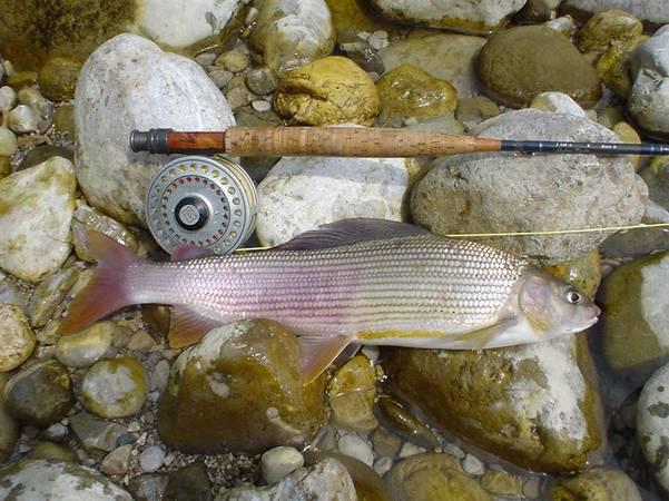 Enns Revier von Active Fishing