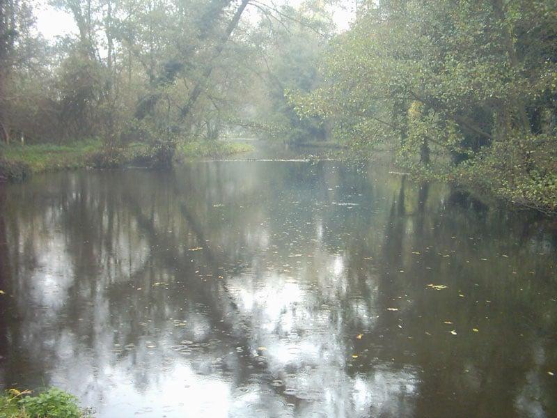 Nette De Witt Seen