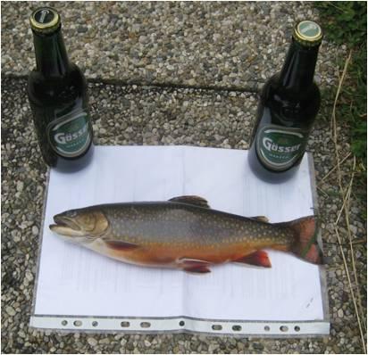Weirer Teich fischen