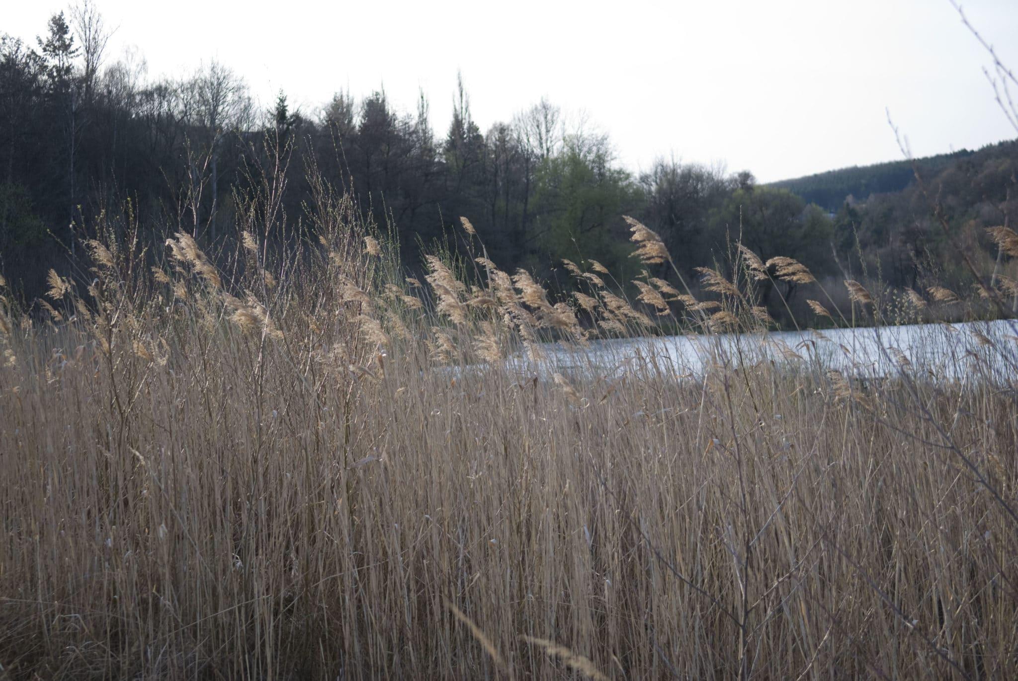 Am Wienerwaldsee fischen & angeln