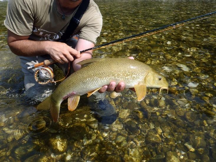 Traun Ebelsberg fischen