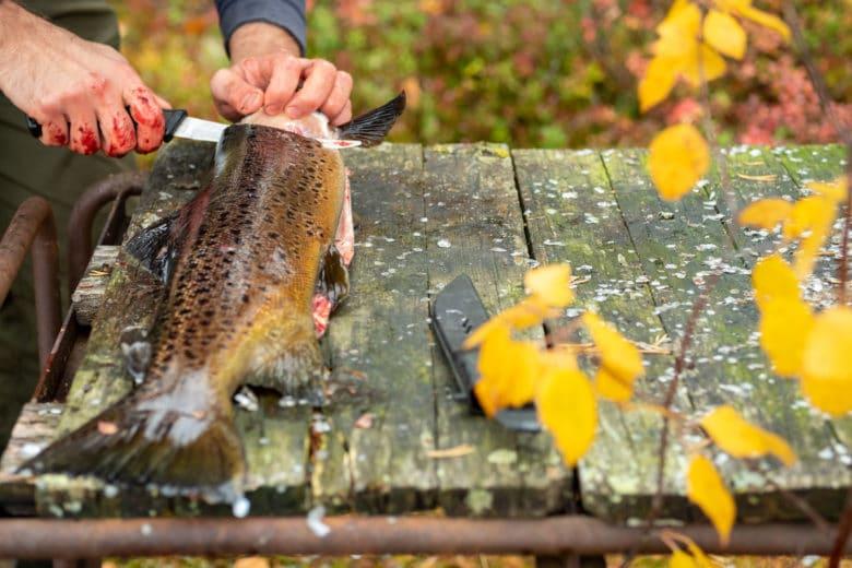 Fisch passt ebenfalls perfekt als Herbstrezept